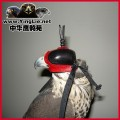 鹰帽/鹰具帽子/隼帽/鹰眼罩鹰头盔/鹰具遮光罩/鹰具阿拉伯式鹰帽